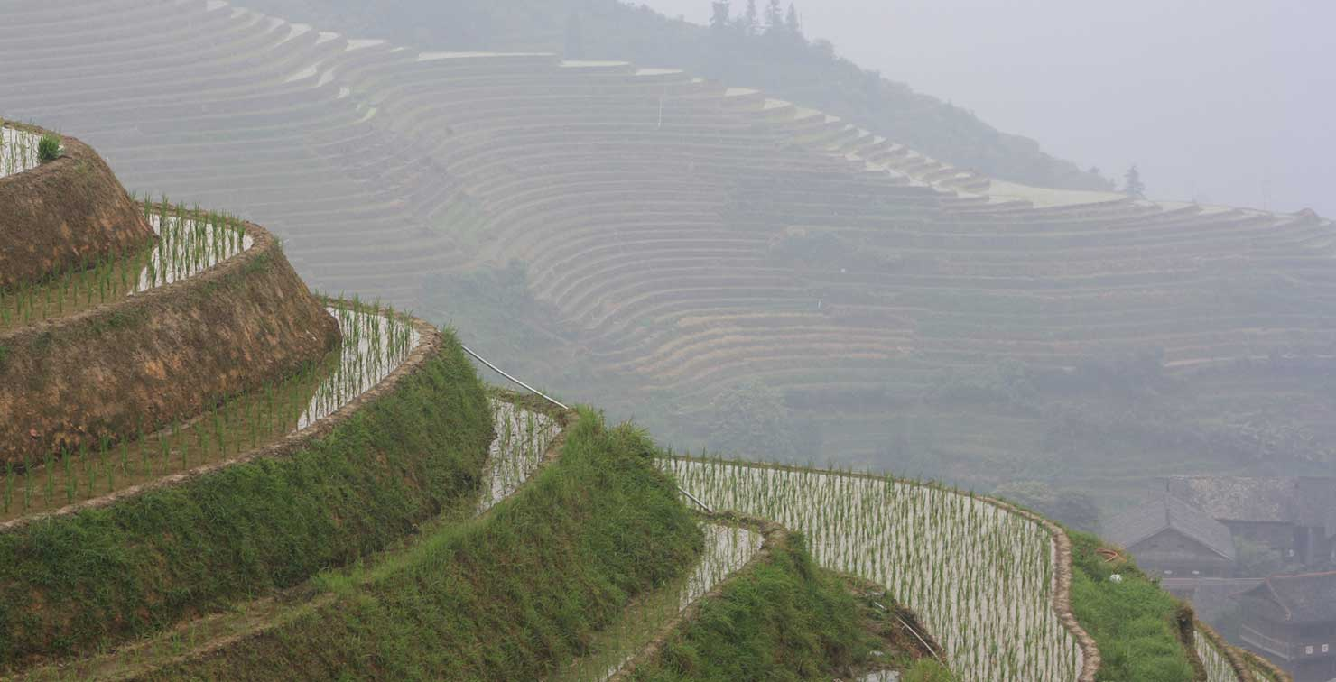 Rice Terraces by Nathan Jensen